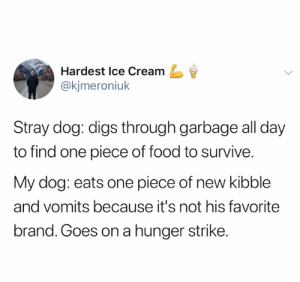 credit and consent: @kjmeroniuk on Twitter: Hardest Ice Cream  @kjmeroniuk  Stray dog: digs through garbage all day  to find one piece of food to survive.  My dog: eats one piece of new kibble  and vomits because it's not his favorite  brand. Goes ona hunger strike. credit and consent: @kjmeroniuk on Twitter