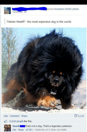 I need that pokemon!: hared Awesome World's photo,  Yesteruay  Tibetan Mastiff - the most expensive dog in the world.  D 3,115  Like Comment Share  6 13,810 people like this.  Snark  That's not a dog. That's a legendary pokemon.  Reply 3 281 Yesterday at 3:10am via mobile  Like I need that pokemon!