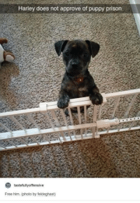 Free Him: Harley does not approve of puppy prison  tastefully offensive  Free him. (photo by feldeghast)