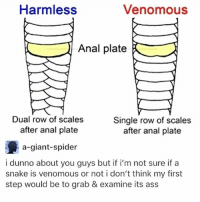 Ass, Food, and Memes: Harmless  Venomous  Anal plate  Dual row of scales  after anal plate  a-giant-spider  Single row of scale:s  after anal plate  i dunno about you guys but if i'm not sure if a  snake is venomous or not i don't think my first  step would be to grab & examine its ass sorry 4 so little memes I got no data n mexico but we're eating some a1 food