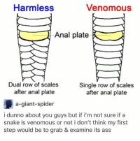 i want to message someone but i don't know how ahhhhhhhhh fml why are you so awkward me ????????: Harmless  Venomous  Anal plate  Dual row of scales  Single row of scales  after anal plate  after anal plate  a-giant-spider  i dunno about you guys but if i'm not sure if a  snake is venomous or not i don't think my first  step would be to grab & examine its ass i want to message someone but i don't know how ahhhhhhhhh fml why are you so awkward me ????????