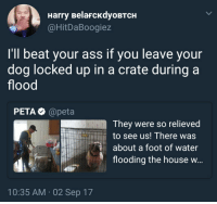 Ass, Bad, and Blackpeopletwitter: Harry BelaFcKdyoBTCH  @HitDaBoogiez  I'll beat your ass if you leave your  dog locked up in a crate during a  flood  РЕТАФ @peta  They were so relieved  to see us! There was  about a foot of water  flooding the house w  10:35 AM 02 Sep 17 <p>I guess PETA ain't all bad (via /r/BlackPeopleTwitter)</p>