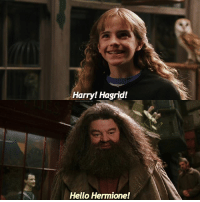 Swipe for the full scene! - Do you like the swipe edits or just one? - hogwarts harrypotterfilm harrypotter harrypotterscenes hermionegranger ronweasley emmawatson danielradcliffe rupertgrint fantasticbeasts fantasticbeastsandwheretofindthem cursedchild jkrowling harrypotterbooks: Harry! Hagrid!  Hello Hermione! Swipe for the full scene! - Do you like the swipe edits or just one? - hogwarts harrypotterfilm harrypotter harrypotterscenes hermionegranger ronweasley emmawatson danielradcliffe rupertgrint fantasticbeasts fantasticbeastsandwheretofindthem cursedchild jkrowling harrypotterbooks