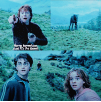 [19.01.17] Someone force me to edit!!! — Q: What would your Animagus be?: Harry, Hermione,  runl It's the Grim!  POTTERSCENES [19.01.17] Someone force me to edit!!! — Q: What would your Animagus be?