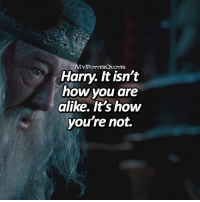 QOTD: The thing on your right is your weapon against Voldemort. What is it? ⛔️❤️ = Follow @mypotterfacts @bookgasms and @mypotterscenes for more of my posts!⚡️: Harry. It isn't  how you are  alike. It's how  you're not. QOTD: The thing on your right is your weapon against Voldemort. What is it? ⛔️❤️ = Follow @mypotterfacts @bookgasms and @mypotterscenes for more of my posts!⚡️
