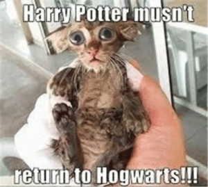 Harry Potter, Life, and Quotes: Harry Potter musn't  return tO Hogwarts!!! 57 Motivational And Inspirational Quotes About Success In Life 20