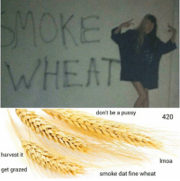 Memes, Pussy, and Smoking: harvest it  get grazed  don't be a pussy  420  Imoa  smoke dat fine wheat Old but gold