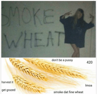 Dank, Pussy, and Smoking: harvest it  get grazed  don't be a pussy  420  Imoa  smoke dat fine wheat