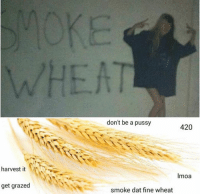 Memes, Pussy, and Smoking: harvest it  get grazed  don't be a pussy  420  Imoa  smoke dat fine wheat Like Your Tumblr Dealer
