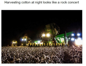 I got bamboozled: Harvesting cotton at night lookss like a rock concert I got bamboozled
