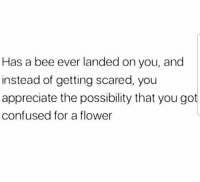 Confused, Memes, and Appreciate: Has a bee ever landed on you, and  instead of getting scared, youu  appreciate the possibility that you got  confused for a flower https://t.co/IH1PYD0kC8