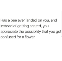Confused, Appreciate, and Flower: Has a bee ever landed on you, and  instead of getting scared, you  appreciate the possibility that you got  confused for a flower <p>All the time !!</p>