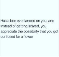 "Confused, Friends, and Instagram: Has  a bee ever landed on you, and  instead of getting scared, you  appreciate the possibility that you got  confused for a flower <p>Bees are your friends ❤</p>  <p><b><a href=""https://www.instagram.com/onlypositivememes/"">follow my instagram…</a></b></p>"