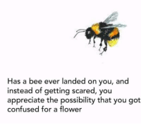 Confused, Appreciate, and Flower: Has a bee ever landed on you, and  instead of getting scared, you  appreciate the possibility that you got  confused for a flower D'aww were all flowers ❤️