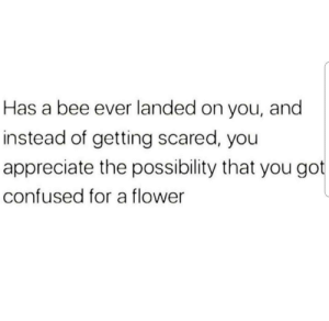 Confused, Appreciate, and Flower: Has a bee ever landed on you, and  instead of getting scared, you  appreciate the possibility that you got  confused for a flower Yer a flower Harry