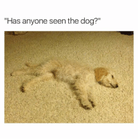 "Funny, Ted, and Hilarious: ""Has anyone seen the dog?"" Find the doggo (@hilarious.ted)"