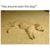 "Dogs, Memes, and Ted: ""Has anyone seen the dog?"" ??? (@hilarious.ted)"