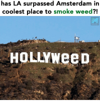 Dope, Weed, and Amsterdam: has LA surpassed Amsterdam in  coolest place to smoke weed?!  MARIJUANA.TV  HOLLYweep 🙌 @dope_weed_photos
