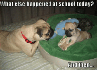 Funny pugs dialogue: hat else hai)Dened at School today?  And thenm Funny pugs dialogue
