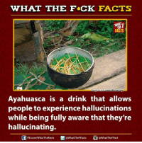 ayahuasca: HAT THE FCK FACTS  Image Source  www.alternet.org  Ayahuasca is a drink that allows  people to experience hallucinations  while being fully aware that they're  hallucinating.  @WhatTheFFact  FB.com/WhatTheFacts  @WhatTheFFacts