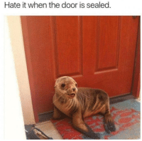 Memes, 🤖, and Door: Hate it when the door is sealed. https://t.co/RfsfpxJqAf