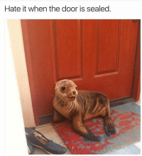 Memes, Seal, and Punny: Hate it when the door is sealed Isn't that just the worst!? 😝 pun puns punny funny punpunpun punsfodays