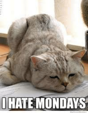 Memes, Mondays, and 🤖: HATE MONDAYS I hate Mondays                       MOL  Morning all, and I agree with this cat :)