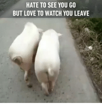 Booty, Memes, and 🤖: HATE TO SEE YOU GO  BUT LOVE TO WATCH YOU LEAVE 🎶Pretty piggies, walking down the street🎶 Follow @9gag🐷 App📲👉@9gagmobile 👈 9gag booty pig allaboutthatbass