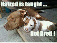 Hatred is taught...not bred!: Hatred istaught  Not Hatred is taught...not bred!
