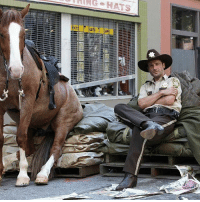 Memes, Horse, and Back: HATS If you could bring back Lori or this horse...? 😂 ripglenn ripabraham walkingdead twd amcthewalkingdead thewalkingdeadamc twdfamily twdcast caryl glennrhee maggiegreene laurencohan glaggie michonne carol carolpeletier daryl maggierhee chandlerriggs carlgrimes ripglennrhee lucille negan glenn twdseason7