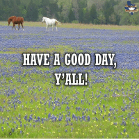 Good morning, y'all! You go out and have great day! RebelTexas SouthLoneStar texas tx lonestar liberty rebel free lonestarstate freetexas texasmade texaspride texasfight lonestarrebellion rednecknation texasstorms texasskies everythingisbiggerintexas madeintexas wheremyheartis thebigtexan mytexas: HAVE A GOOD DAY  ALL! Good morning, y'all! You go out and have great day! RebelTexas SouthLoneStar texas tx lonestar liberty rebel free lonestarstate freetexas texasmade texaspride texasfight lonestarrebellion rednecknation texasstorms texasskies everythingisbiggerintexas madeintexas wheremyheartis thebigtexan mytexas