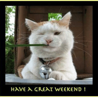have a good weekend: HAVE A GREAT WEEKEND!