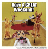 have a good weekend: Have A GREAT  Weekend!  www.facebook.com/NevenrustSmiling Cat