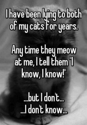 Memes, Time, and Been: have been iuing CO both  of mycats for years  Any time theu meow  at me,ltellthem  know,I know!  .butIdont  ..Il dont know. I sometimes know.