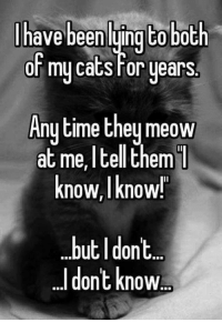 Cats, Meme, and Memes: have been luingt0 both  or my cats For years  Anytime they meow  at I them  I  me, tell know,I know!  but I dont.  dont know Sometimes I know. Do you know your cat's meows and what they mean? Via Grumpy Cat Memes
