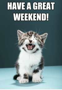have a good weekend: HAVE GREAT  WEEKEND!