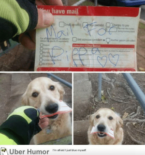 omg-images:  'Sometimes, Pippa comes out for the daily delivery but there's no mail for her to collect. So I have to improvise' – local postie: have mail  ge parcels)  es to pay  Fay aver the counter  during businesshous  For ela  (please bik:specific 1D requirerent  on delivery Only addressee aincollect orAnother person can colesct  Collection Author sation  nDe Licence  Oo  Permt  Iber  Humor  I'm afraid I just blue myself. omg-images:  'Sometimes, Pippa comes out for the daily delivery but there's no mail for her to collect. So I have to improvise' – local postie