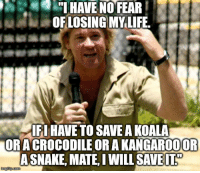 Life, Steve Irwin, and Fear: HAVE NO FEAR  OFLOSING MY LIFE.  FI HAVE TO SAVE A KOALA  ORACROCODILE OR A KANGAR0OOF  ASNAKE, MATE IWILL SAVE <p>Steve Irwin Quote that Inspired Me</p>