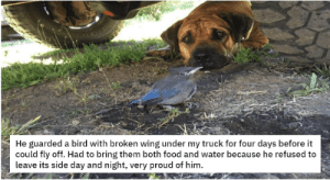 Have some faith in humanity, people! These animal stories will put an instant smile on your face, even if it's just for a few minutes. #animalmemes 3wholesomememes #wholesomeanimals #cuteanimals #catmemes #dogmemes: Have some faith in humanity, people! These animal stories will put an instant smile on your face, even if it's just for a few minutes. #animalmemes 3wholesomememes #wholesomeanimals #cuteanimals #catmemes #dogmemes