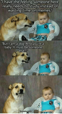 "Memes, Time, and Baby: have the feeling someone here  really needs to study instead of  wasting time on memes.""  But l am a dog. And you're a  baby, It must be someone  else I should start studying"