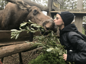 Have you ever kissed a moose?<33 sending love your way; stay healthy!: Have you ever kissed a moose?<33 sending love your way; stay healthy!