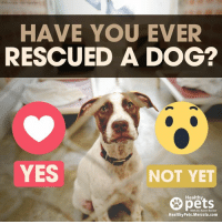 mercola: HAVE YOU EVER  RESCUED A DOG?  YES  NOT YET  Healthy  With Dr. Karen Becker  HealthyPets.Mercola.com