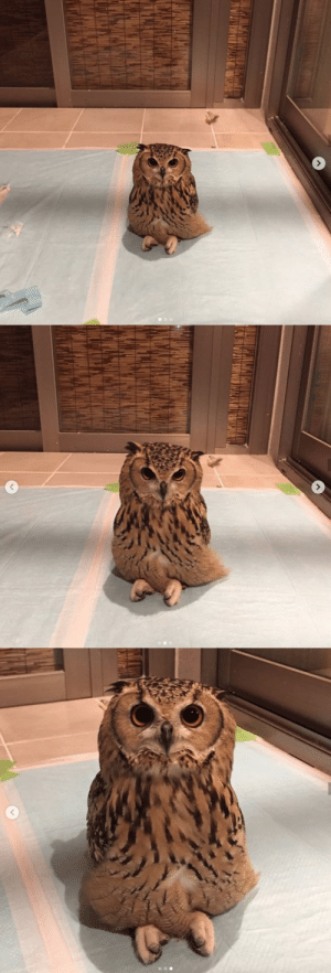 Have you ever wondered how owls sit? via twitter: @Gen3Act03: Have you ever wondered how owls sit? via twitter: @Gen3Act03