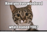 Grumpy Cat, Youp, and  Have You Ever: Have you ever wondered  what named YOUP
