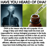 Beautiful, Bodies , and Life: HAVE YOU HEARD OF DHA?  G: STANDUP911  DHA is the reason why fish oil is popular. It's an  omega-3 fatty acid which helps build the brain and  responsible for various biological processes in the body.  There is a very small fraction of DHA in fish oil, and its  of poor quality since usually the fish are farmed for it.  DHA sourced from algae oil is among the most  efficient, effective and humane way to get this vitally  important brain-building fatty acid into our bodies. I have new product available on my website! Use my username Standup911 to receive 15% off your order. - Did you know, The human brain is largely made of fat — 60% by dry weight. One particular group of fats, the omega-3 essential fatty acids, is the most important for the brain's structural integrity and performance. And one omega-3 fatty acid, DHA, is the single most crucial nutrient you can take for brain health throughout all stages of life. DHA is a foundational nutrient needed for a healthy, optimally functioning brain. Trying to build a healthy brain without it is like building a house on a foundation of sand. Of all the essential fatty acids, the omega-3s are the most abundant in the brain. They are the preferred building blocks of brain cell membranes and nerve cells. When omega-3s aren't available, your brain will use whatever fats are available, but this leads to suboptimal brain cells. - @cymbiotika standup911 bethechange cymbiotika brain health dha antioxidants astaxanthin wanderlust beautiful motivation inspiration