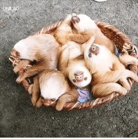 Dank, Baby, and 🤖: Have you seen anything cuter than a basket full of baby sloths?! 😍😍