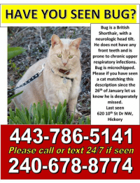 HAVE  YOU SEEN BUG?  Bug is a British  Shorthair, with a  neurologic head tilt.  He does not have any  front teeth and is  prone to chronic upper  respiratory infections.  Bug is microchipped.  Please if you have seen  a cat matching this  description since the  26th of January let us  know he is desperately  missed  Last seern  620 10th St Dr NW,  Hickory  443-786-5141  240-678-8774  Please call or text 24/7 if seen HICKORY, NC-- LOST CAT  To everyone I know in Catawba County NC and surround can you please share with all your friends. My Bug is still missing since 1/26/18. Bug has a neurological head tilt, and chronic upper respiratory issues. When he went missing ( contractor opened a dead bolted door and left it open) in the hillcrest/oakwood neighborhood of hickory. He had a collar on, but it is designed to fall off if he gets caught up. I am desperate to get him back, can you please share the missing poster and his pics, he can be dropped off at any vets in the area (they all know he is missing, call animal control or drop him at my house there is a cat play pen outside my back door zip him in if you dont want to knock. there will be no questions asked I just want my cat back. 600 block of 10th st dr nw hickory 240-678-8774, esprit3223@aol.com