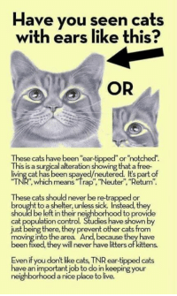 """Memes, 🤖, and Ark: Have you seen cats  with ears like this?  OR  These cats have been ear-tipped or no  This is a surgical alteration showing that afree.  living cat has been spayed/neutered. Its part of  which means """"Neuter"""",""""Return"""".  These cats should never be re-trapped or  brought to a shelter, unless sick. Instead, they  should be left in their neighborhood to provide  cat population control. Studies have shown by  just being there, they prevent other cats from  moving into the area. And, because they have  een fixed, they will never have litters of kittens.  Even if you don't like Ca  TNR ear-tipped cats  ave an important job to do in keeping your  neighborhood a nice place to live. Did you know that Noah's Ark Animal Hospital Rockford Illinois is now offering a TNR program thanks to the generous Guy Reno grant? If you are caring for any feral/barn cats, the most important thing is for them to be spayed/neutered, you can now do that at Noah's Ark Animal Hospital for a $10 copay. Contact 815-489-9800 for more information and follow the hospital on Facebook"""