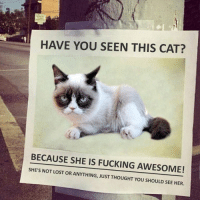 Grumpy Cat, Cat, and Hate: HAVE YOU SEEN THIS CAT?  BECAUSE SHE IS FUCKING AWESOME!  SHE'S NOT LOST OR ANYTHING, JUST THOUGHT YOU SHOULD SEE HER. Who did this! I hate it.