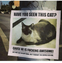 Fucking, Funny, and Ted: HAVE YOU SEEN THIS CAT  CAUSE HE IS FUCKING AWESOME!  HESNOTLOST OR ANYTHING, UST THOUGHT YOU SHOULD SEEHIM Swipe for more ➡ (@hilarious.ted)